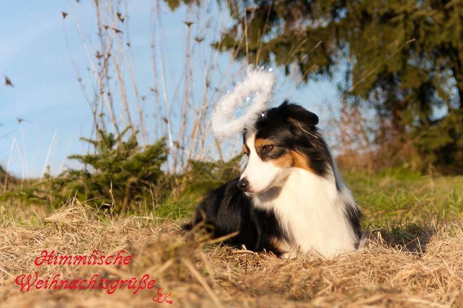 Himmlische Weihnachtsgrüße.Hundeschule Im Raum Winnenden Berglen Himmlische Weihnachtsgrüße